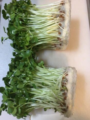 黒酢ネギ大蒜の絶品さっぱり豚コマ炒め(糖質6.2g)