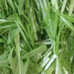 簡単にえぐみを取る水菜のしゃきしゃきな茹で方(写真付き)