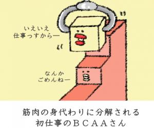 筋トレ効果を最大化するBCAAの効果と必要性を、イラスト付きで徹底してご説明するね!