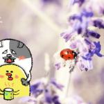 ダイエット雑談第51回 高揚☆効用!アロマでメンタルほぐシックス!