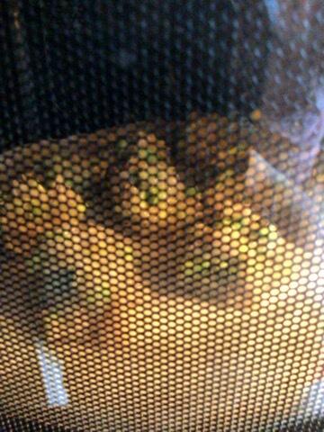 海老チキンアボカドの辛子カレーマヨボール