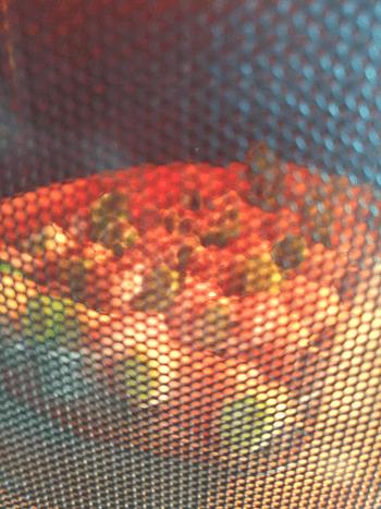 味噌塩麴の柔らか辛子マヨ鶏むねネギマ
