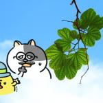 ローカボ調査日誌(104) いいとこ丸儲け☆元気溢れる着衣乾布摩擦!