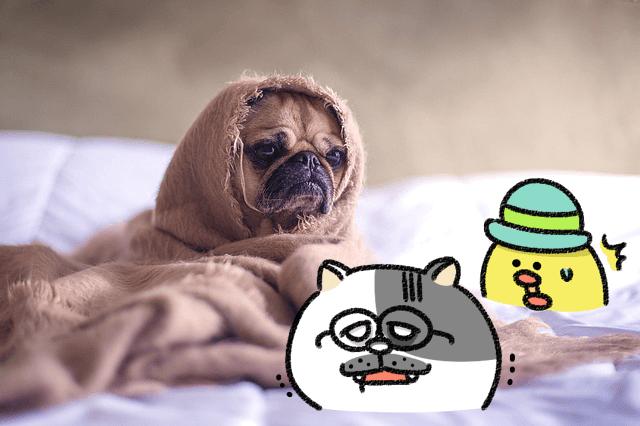 ローカボ調査日誌(119) ぐっすり最高☆工夫一発の睡眠質向上メソッド!(自律神経編)