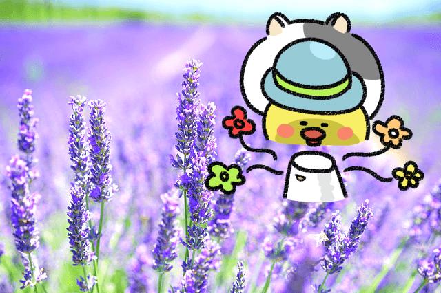 ローカボ調査日誌(116) 凄いよ芳醇☆デトックスアロマセラピー!(後編)