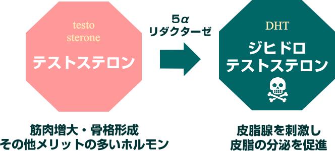 ジヒドロテストステロンの生成