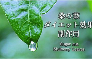 イラストで分かる糖質カット『桑の葉』のダイエット効能と副作用