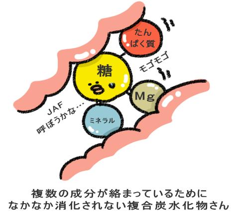 複合炭水化物による脂肪定着阻害