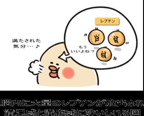 脳内のレプチンが満腹感を引き上げる図