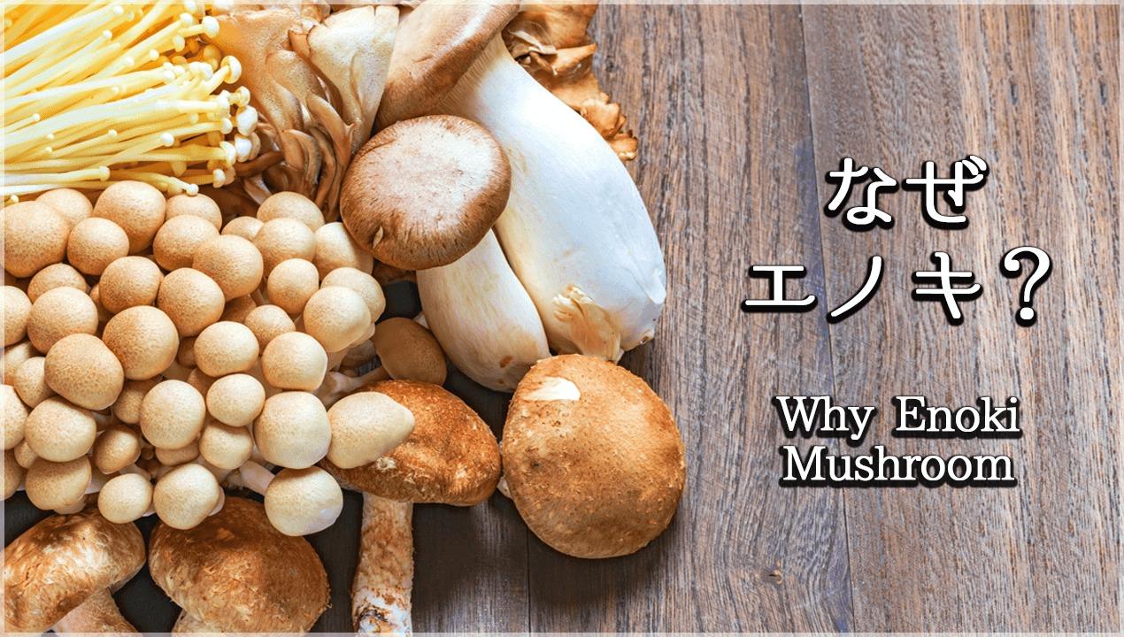 なぜエノキ茸はダイエットに最適なのか