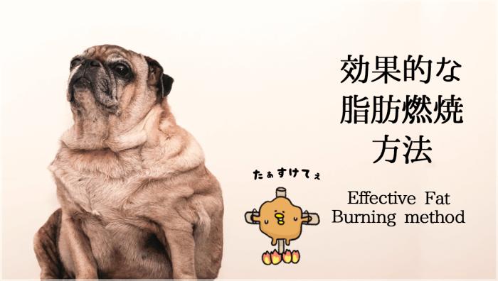 イラストでとても良く分かる運動で効率的に脂肪燃焼する方法