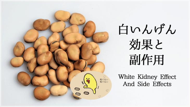イラストで分かる白いんげん豆(ファビノール)のダイエット効果と副作用