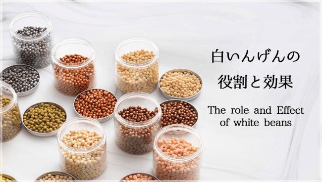 白いんげん豆(ファビノール)の役割と効果