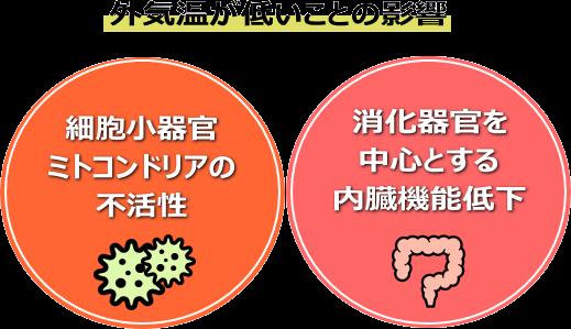 (図:細胞小器官ミトコンドリアの不活性)(消化器官を中心とする内臓機能低下)