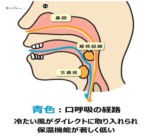 口呼吸の経路