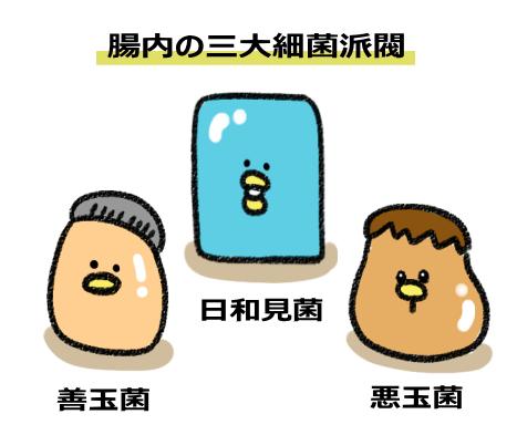 腸内に住む三大細菌派閥