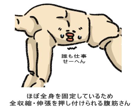 ほぼ全身を固定しているため 全収縮・伸張を押し付けられる腹筋さん