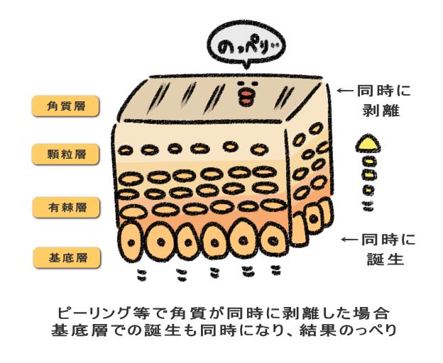 ピーリング等で角質が同時に剥離した場合 基底層での誕生も同時になり、結果のっぺり