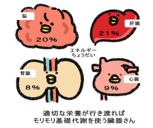 適切な栄養が行き渡れば、モリモリ基礎代謝を行う臓器さん