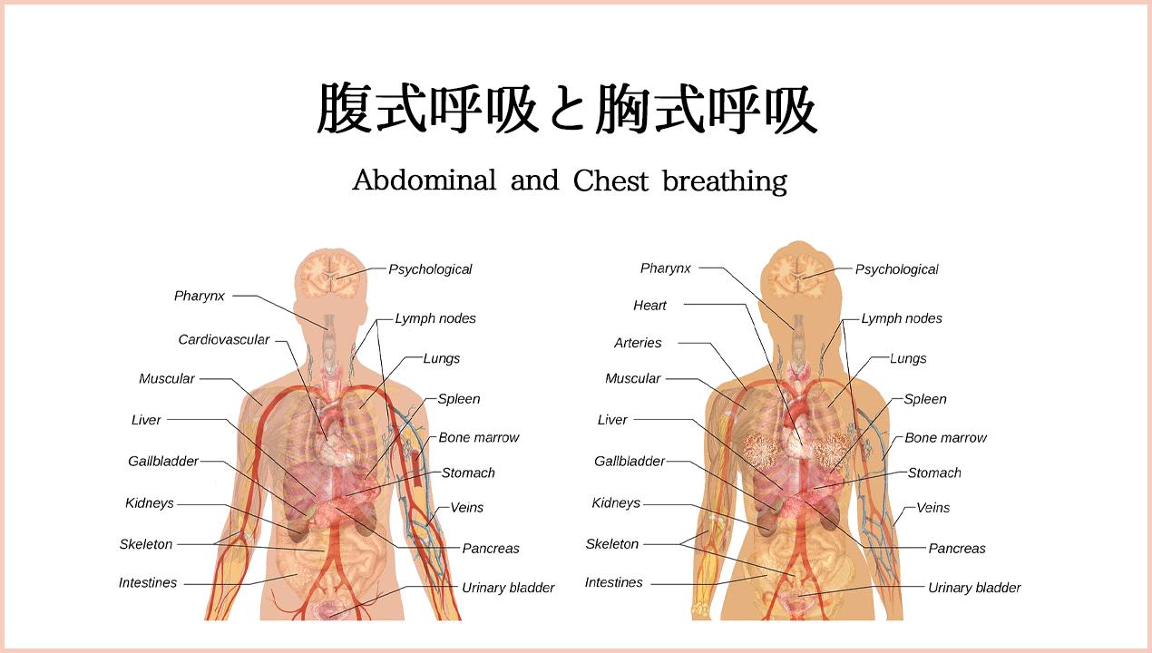 呼吸は胸式と腹式の二種類