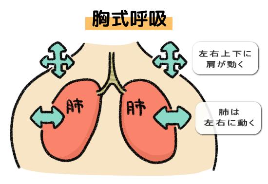 胸式呼吸の特徴