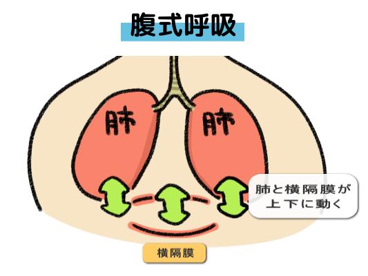 腹式呼吸の特徴