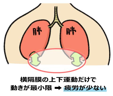 肺や上半身が左右に揺れない