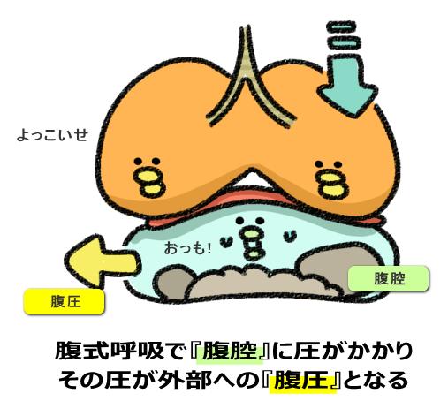 腹式呼吸で『腹腔』に圧力がかかり その圧力が外部への『腹圧』となる