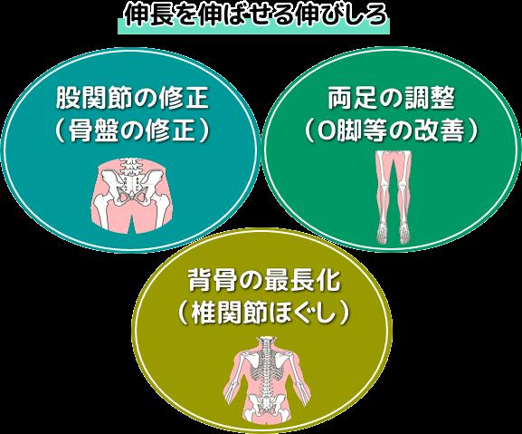 股関節の修正(骨盤の修正)・両脚の修正(O脚等の修正)・背骨の最長化(椎関節のほぐし)
