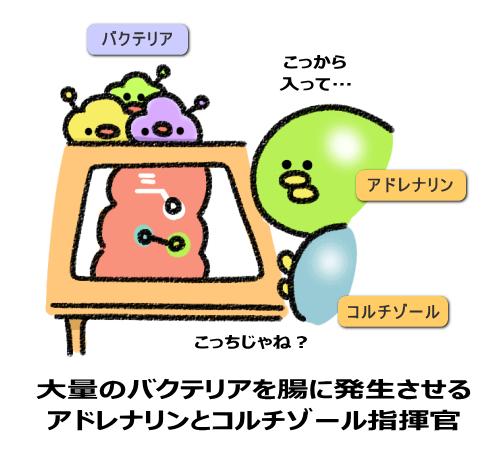 大量のバクテリアを腸に発生させる アドレナリンとコルチゾール指揮官
