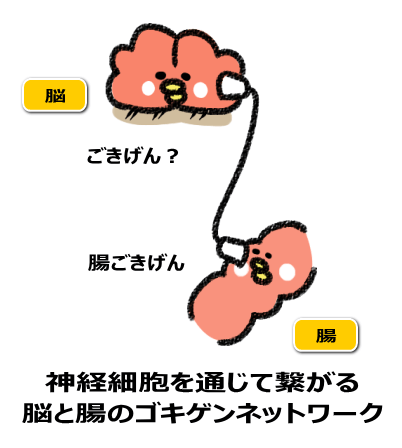 神経細胞を通じて繋がる 脳と腸のご機嫌ネットワーク