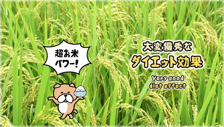 玄米7号食による高いダイエット効果